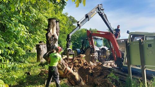 <p> Ob sankališču v mestnem parku Tivoli smo tako zamenjali enega od dotrajanih debel in ga skupaj s preostalimi napolnili z lesnim muljem.<br> Foto: Saša Vochl </p>