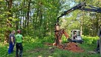 <p> Novo deblo za hrošča puščavnika smo postavili tudi na Šišenskem hribu.<br> Foto: Saša Vochl </p>