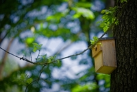 <p>  Tičistan - območje kjer se lahko srečamo s pticami in vevericami; Foto: Artinfoto.si </p>